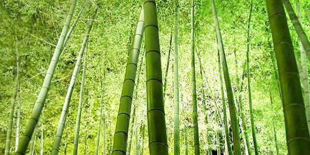 Mazzo Canne Bamboo Colorate Arredamento Sostegno Pomodori